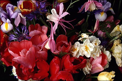 Un buchet de flori (lalele, iris, albăstrea, etc.). Foto, Foto